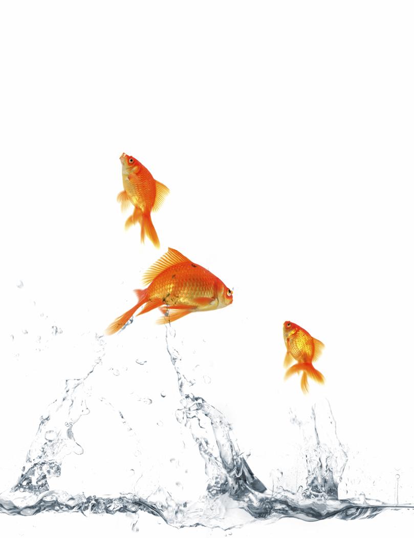 juggling goldfish