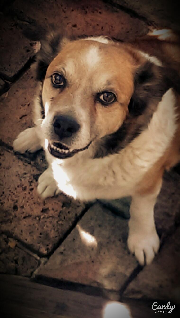 Dog-gone amazing!